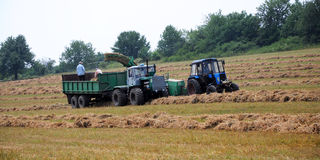 Stocking hay for livestock royalty free stock images