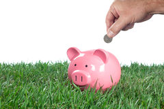 Stocking a piggybank Royalty Free Stock Photography