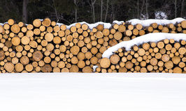 Stockpile of cut logs Stock Photos