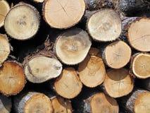 A Stockpile of Fresh Cut Logs. A pile of fresh cut firewood logs Royalty Free Stock Photos