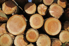 Stockpile of logging timber. Showing annual rings royalty free stock photography