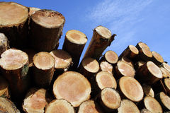 Stockpile of logging timber. Showing annual rings stock photos