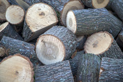 Stockpile of logs Royalty Free Stock Image