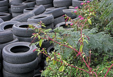 A Stockpile of Used Tires with Plants. Royalty Free Stock Photo