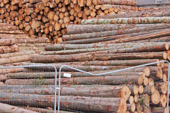 Stockpiled Logs Stock Photography