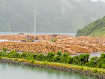 Stockpiled timber ready to be shipped Stock Images