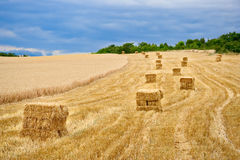 Stockpiles of hay Royalty Free Stock Photography