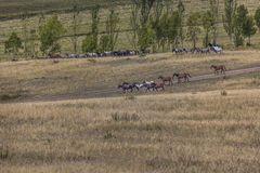 Stockriders with flock in Alay mountains on pastureland - life i Royalty Free Stock Photo