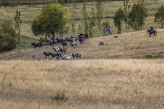 Stockriders with flock in Alay mountains on pastureland - life i Royalty Free Stock Photography