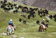 Stockriders with flock in Alay mountains on pastureland. Life in Kyrgyzstan Stock Photos
