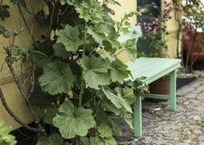 Stockrose und ein tadelloser grüner Garten setzen auf alten Kopfsteinen auf die Bank Stockfoto