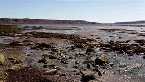 Stockton Springs Maine at low tide. stock video