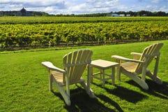 Stoelen die wijngaard overzien Royalty-vrije Stock Fotografie