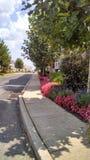 Stoep met bloemen en installaties vrij Royalty-vrije Stock Fotografie