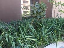 Stoff gestaltet - Grünpflanzen in einem Garten landschaftlich stockbild