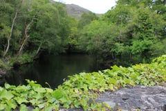 Stoff Green River in der irischen Landschaft lizenzfreies stockfoto