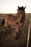 Stoic stallion Stock Photography