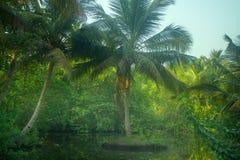 Stojące wody, Sago palmy Kerala, India Zdjęcia Royalty Free