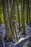 Stojak ciemni drzewa z robić drabiną zdjęcie royalty free