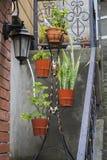 Stojak dla garnków z kwiatami Zdjęcia Royalty Free