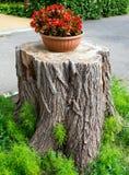 Stojak dla kwiatu garnka robić drzewny fiszorek zdjęcie royalty free