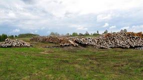 Stojaka drewno notuje dalej pole Obraz Royalty Free