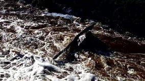 Stok op een rots in St Louis River wordt geplakt dat stock footage