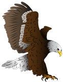 Stoker17. Illustrated bird, an eagle in landing Royalty Free Stock Photos