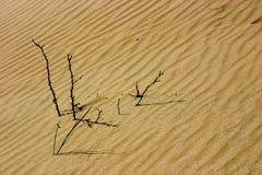 Stokken in de duinen Royalty-vrije Stock Foto