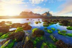 Stokksnesbergen en groene waterplanten Royalty-vrije Stock Foto's