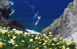 Stokrotek wildflowers na tle niebieskie niebo, b??kitny morze i wyspa, Lato pogodny ranek na wyspie Santorini, Grecja fotografia royalty free