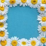 Stokrotka kwiatów rama na błękitnym tle Mieszkanie nieatutowy Odgórny widok Zdjęcia Royalty Free