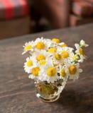 Stokrotka kwiaty Fotografia Stock