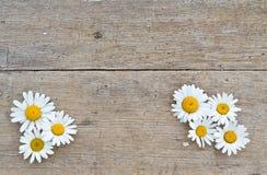 Stokrotka kwitnie na drewnianym tle Zdjęcia Stock
