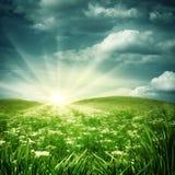 stokrotka ranek łąkowy mglisty Zdjęcia Royalty Free