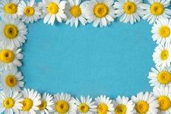 Stokrotki chamomile kwiatów rama na błękita ogródu stole Odgórny widok z kopii przestrzenią Fotografia Royalty Free