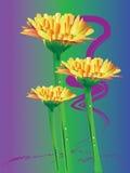 Stokrotki gerbera kwiat Fotografia Royalty Free