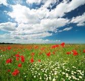 Stokrotki i maczek wiosny łąka obraz royalty free