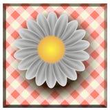 Stokrotki lata biały kwiat odizolowywający na białym tle Zdjęcia Royalty Free