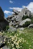Stokrotki przy Grodowym wzgórzem Zdjęcia Stock