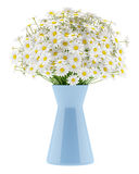 Stokrotki w błękitnej wazie odizolowywającej na bielu ilustracja wektor