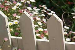 Stokrotki z rocznika palika białym ogrodzeniem Obraz Royalty Free