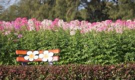 Stol av en bakgrund blommar framme naturligt Royaltyfria Foton