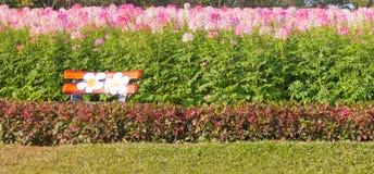 Stol av en bakgrund blommar framme naturligt Arkivfoto