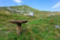 Stol för att mjölka singel-lade benen på ryggen kor Typisk av herdar arkivbild
