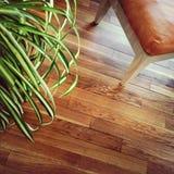 Stol och växt på trägolv Arkivfoton