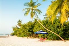 Stolar och paraply i Palm Beach i ottan - tropiskt feriebegrepp royaltyfria foton