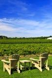 stolar som förbiser vingården royaltyfri fotografi