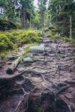 Stolowe Mountains in Poland. Forest path covered with tree roots on Mount Naroznik in Table Mountains, Sudetes in Poland Royalty Free Stock Images