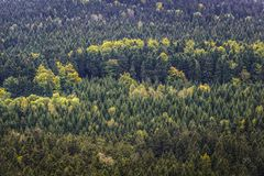 Stolowe Mountains in Poland. Forests around Szczeliniec Wielki massif in Table Mountains National Park, Sudetes in Poland Royalty Free Stock Photos